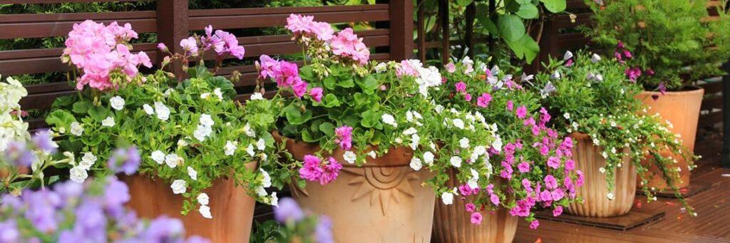 Ktore Kwiaty Sa Latwe W Uprawie W Przydomowym Ogrodzie Magazyn Fakty