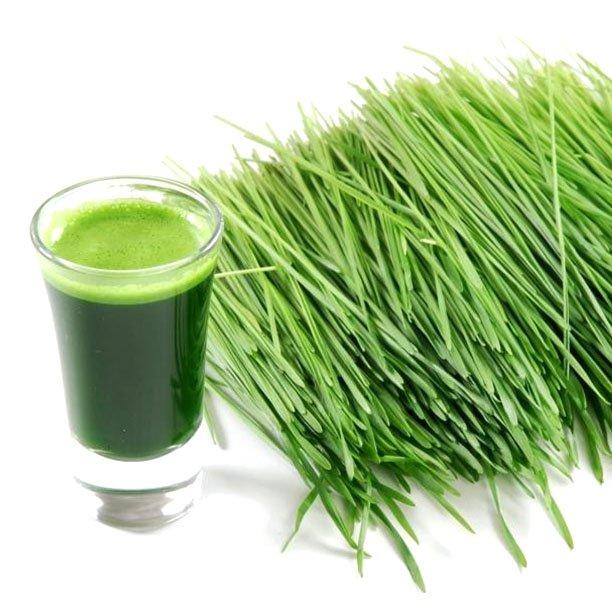 es medica zielony jęczmień