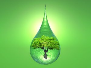a tree inside a drop of water on green background