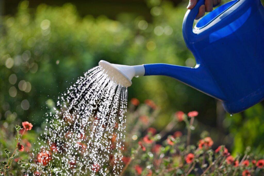 prawidłowe podlewanie roślin