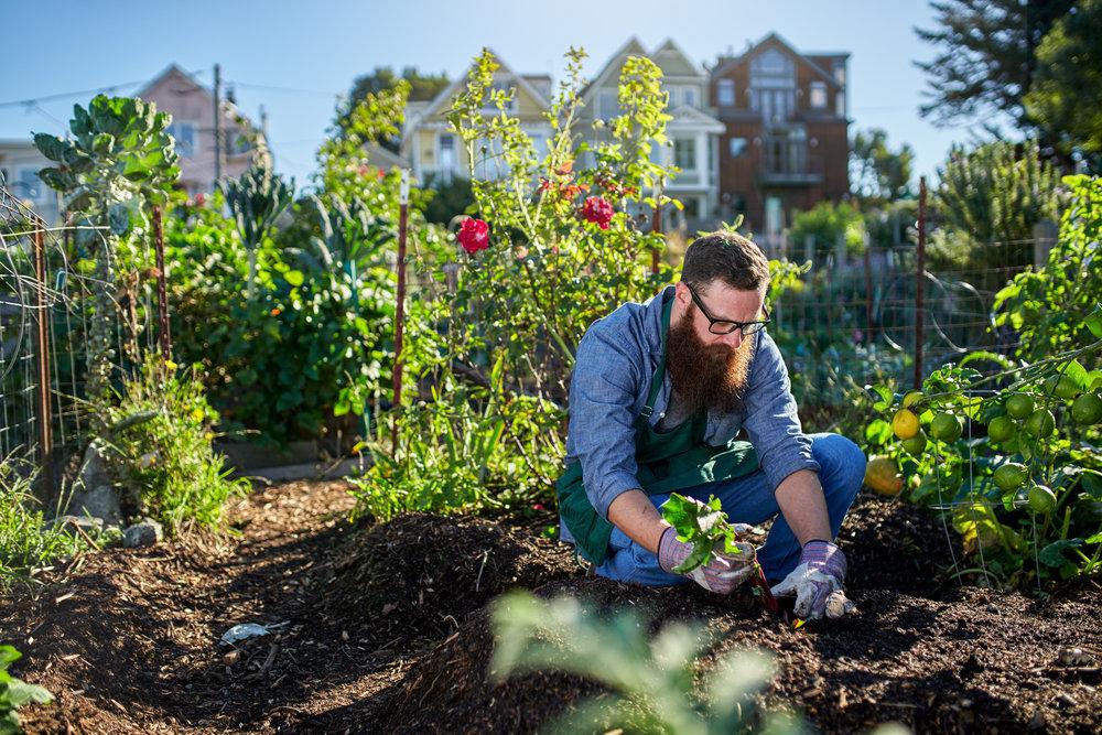 Jak urządzić ogród