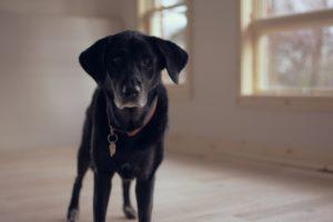 Zadbaj o bezpieczeństwo psa