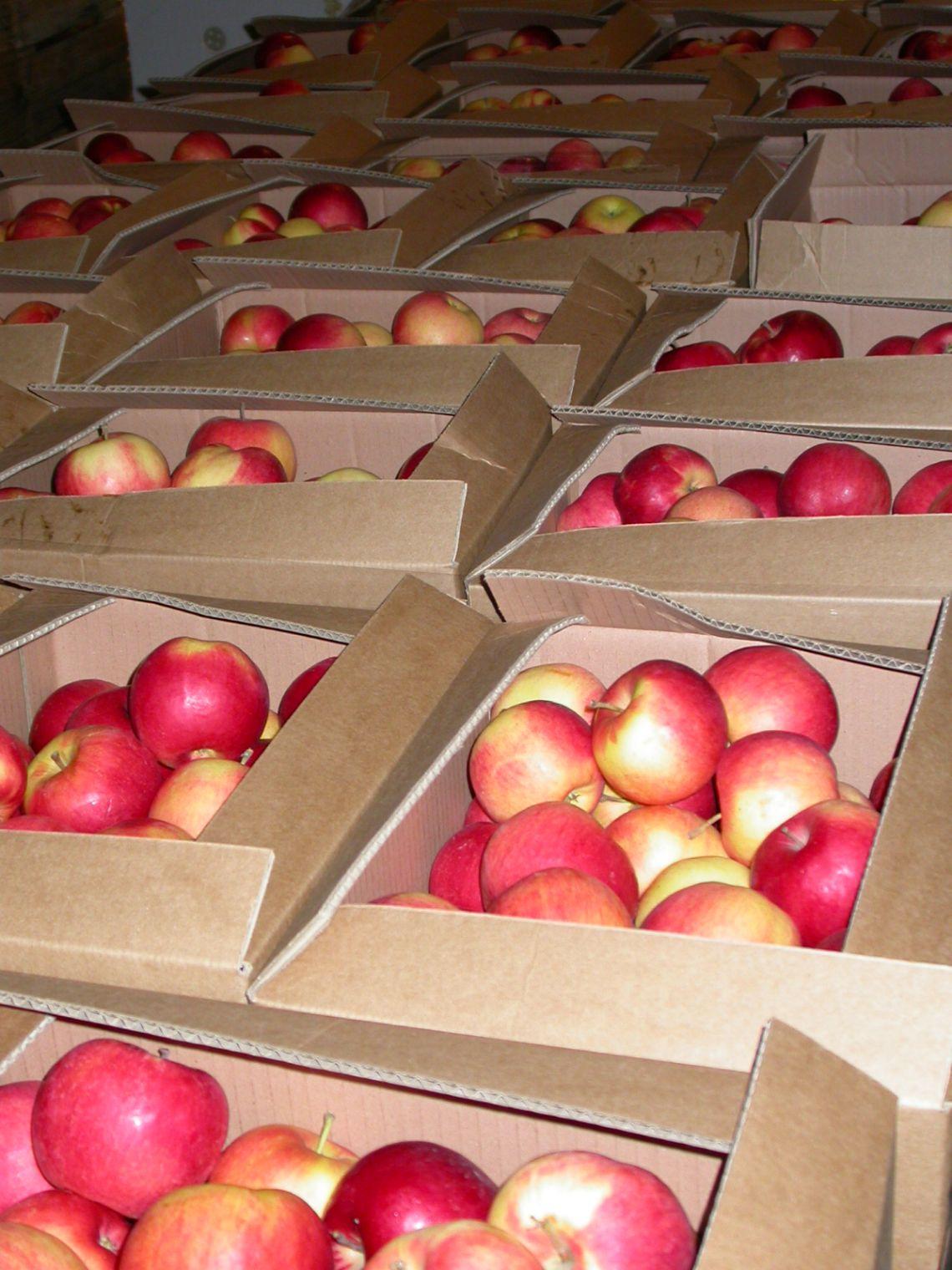 Dziś Unia Europejska pije soki głównie z naszych jabłek, jutro może sięgnąć po tańsze: ukraińskie, mołdawskie, a może nawet chińskie